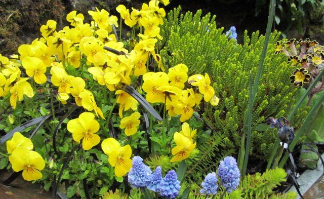 flower yellow bud