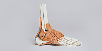 Physiotherapy-for-Ankle-Sprains
