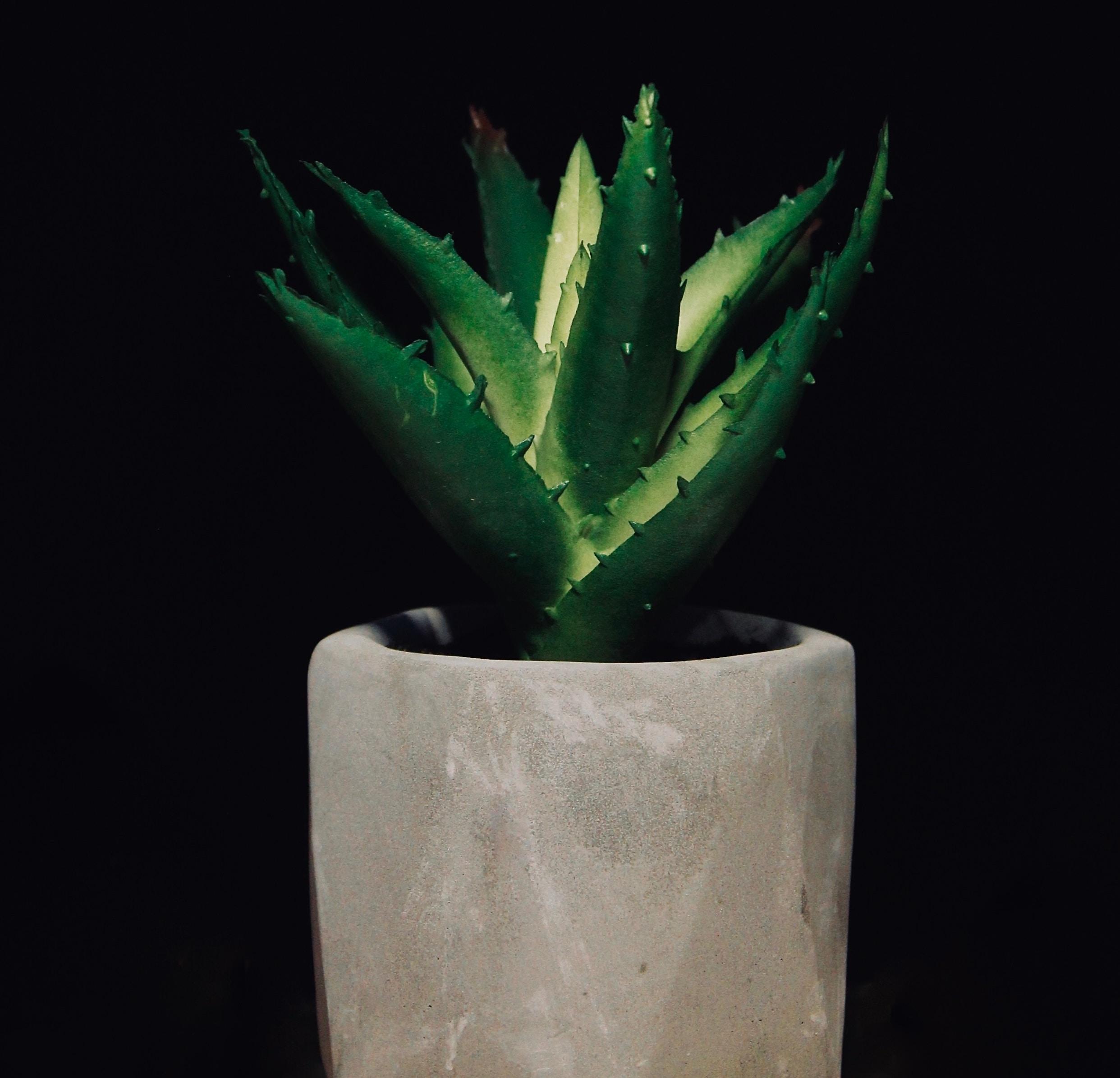 Cactus IMS
